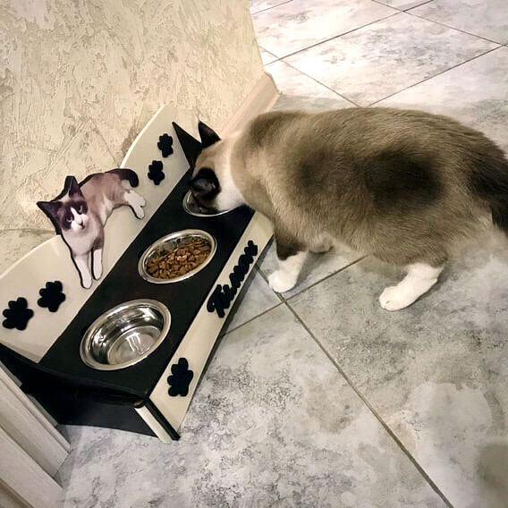 миски для кота с именем кормушка с фото купить недорого